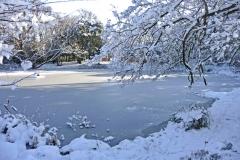 Wasserpflanzen-Winter-5