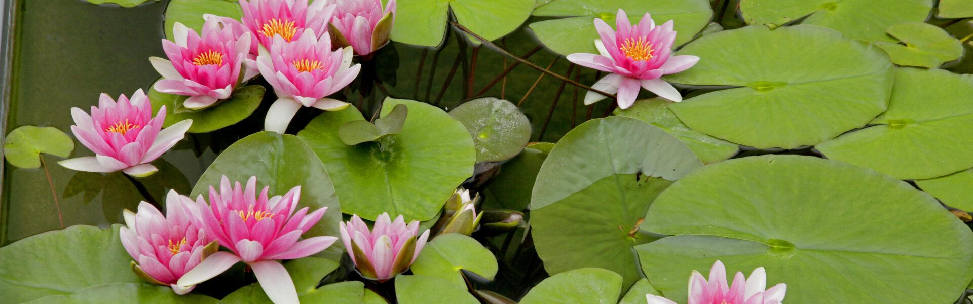 Garten. Wasser. Blog.