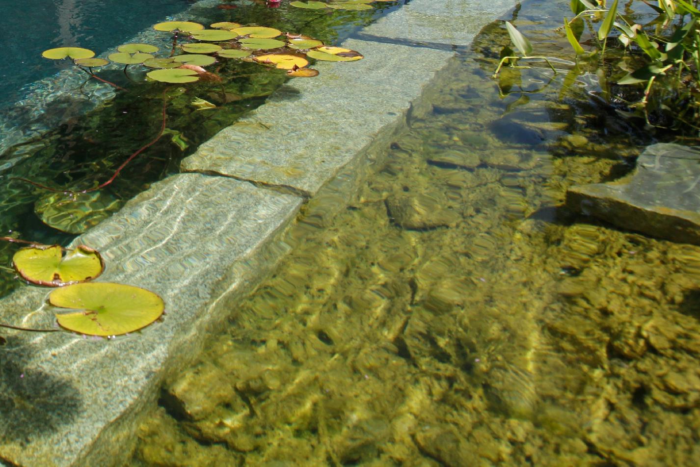 Algen-im-Teich