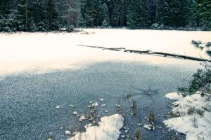 Wasserpflanzen im Winter