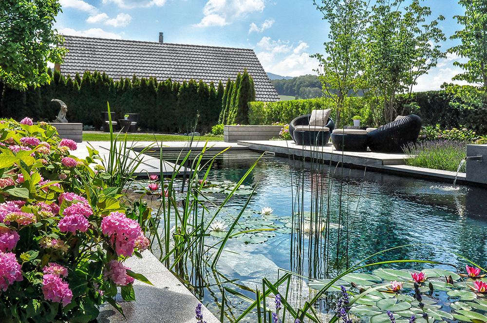 gartengeplaetscher-schwimmteich-wassergarten-mit-design-schwimmteich-1